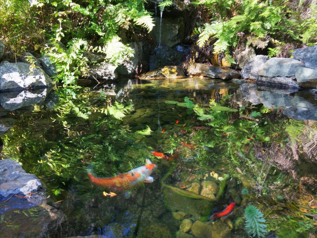 Water Gardens - Northern CA